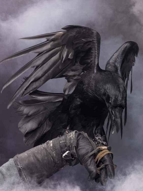 Big Black Raven #1 -