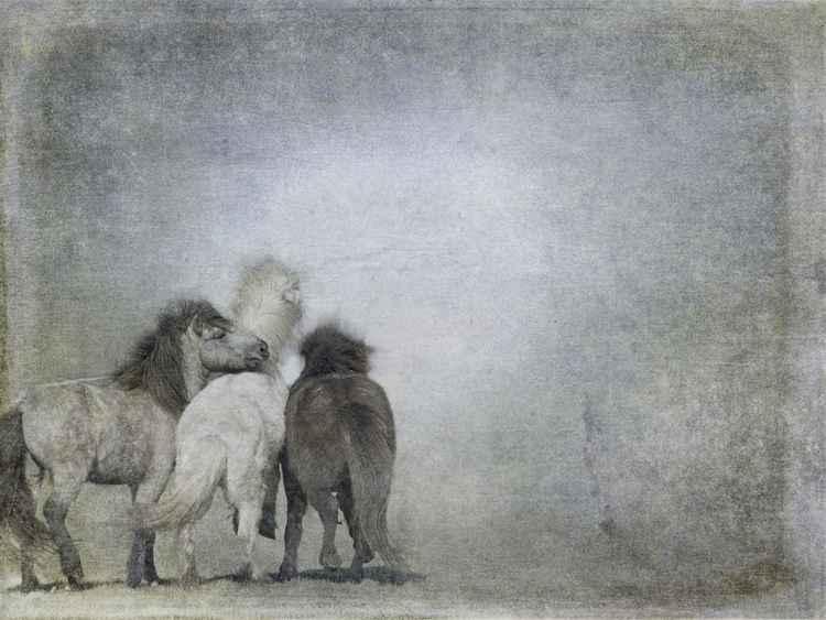 Three Horses -