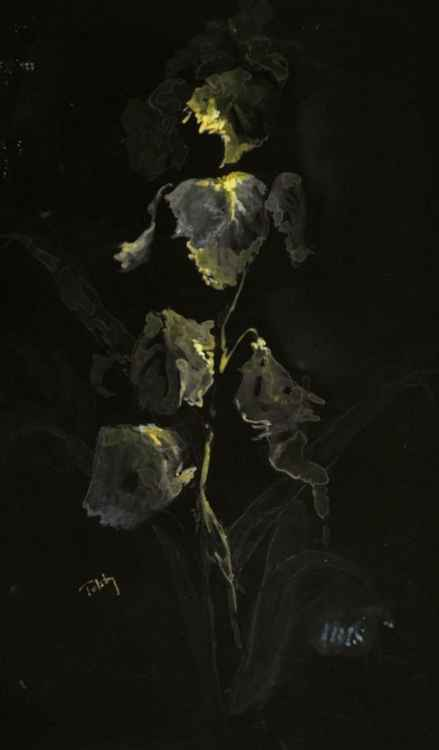Iris, in the Black -
