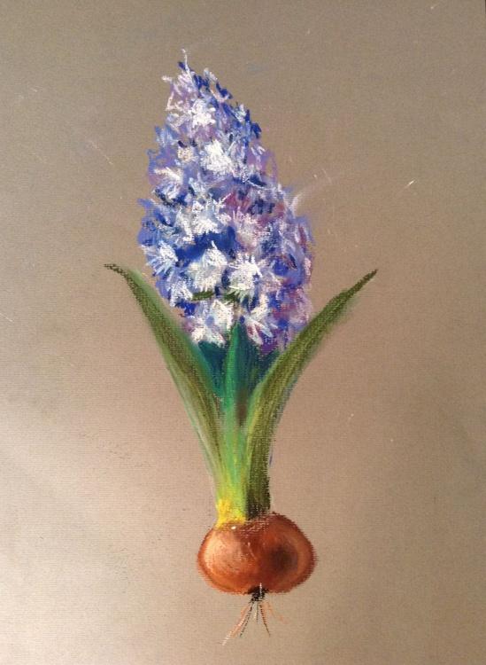 The hyacinth - Image 0