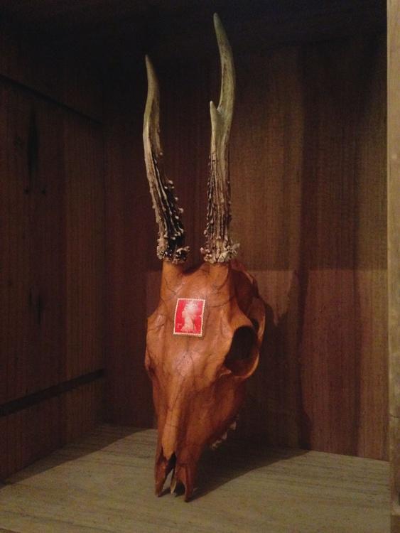 Packaged Skull - Image 0