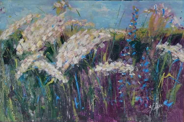Queen Ann's Lacy Field -