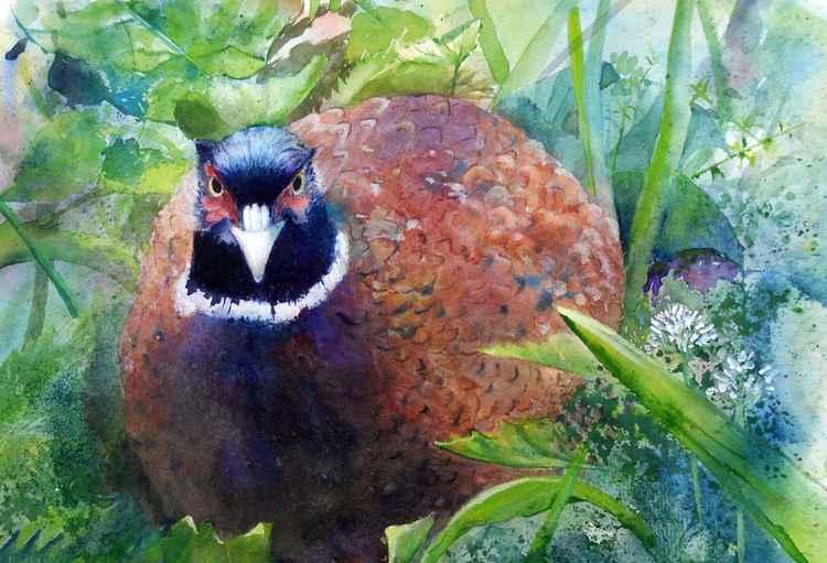 Evanescent Pheasant