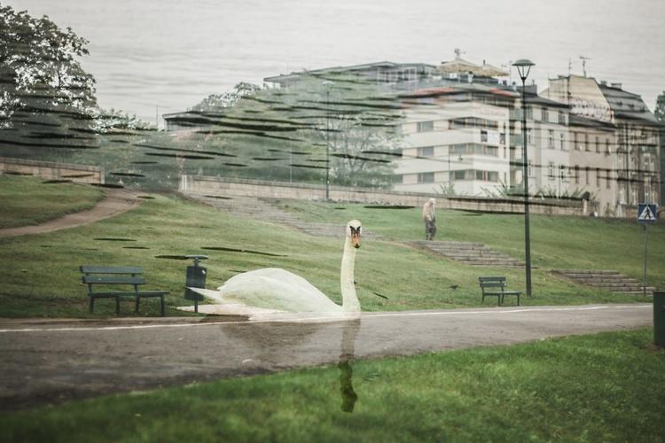Walking swan - Image 0