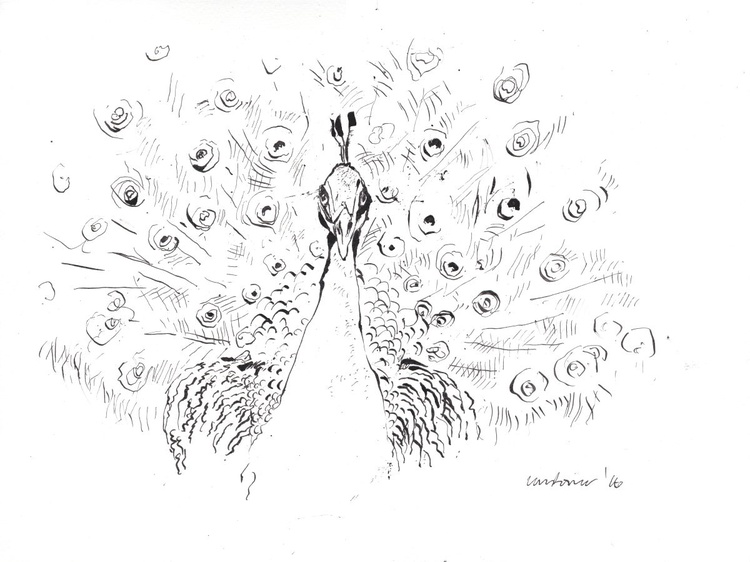 Monochrome Peacock - Image 0