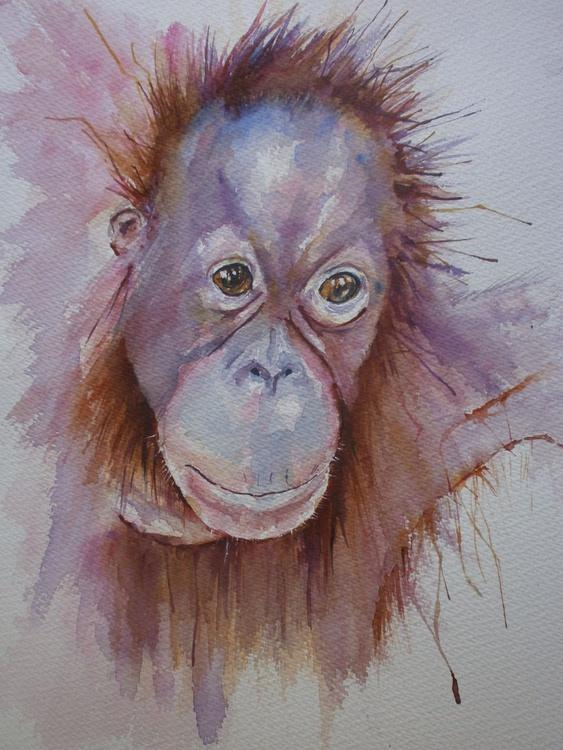 Orangutang - Image 0