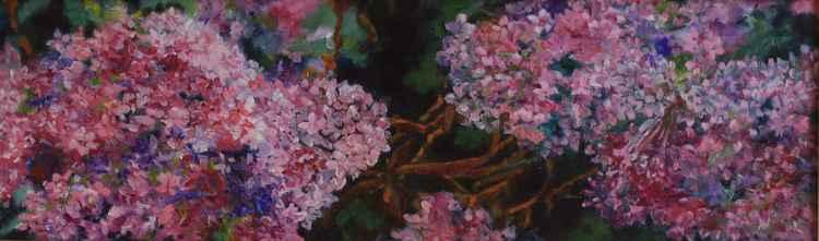 Flowering -