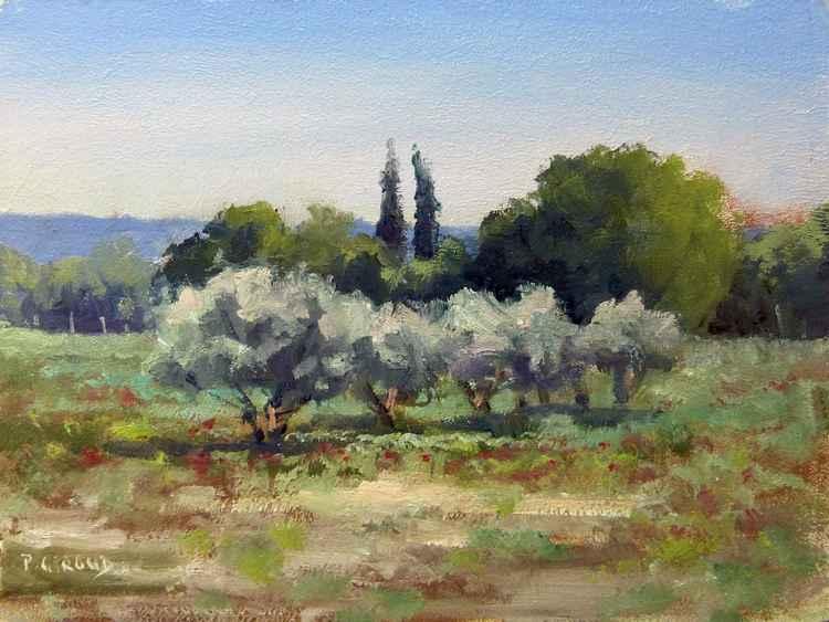 Olive Trees -