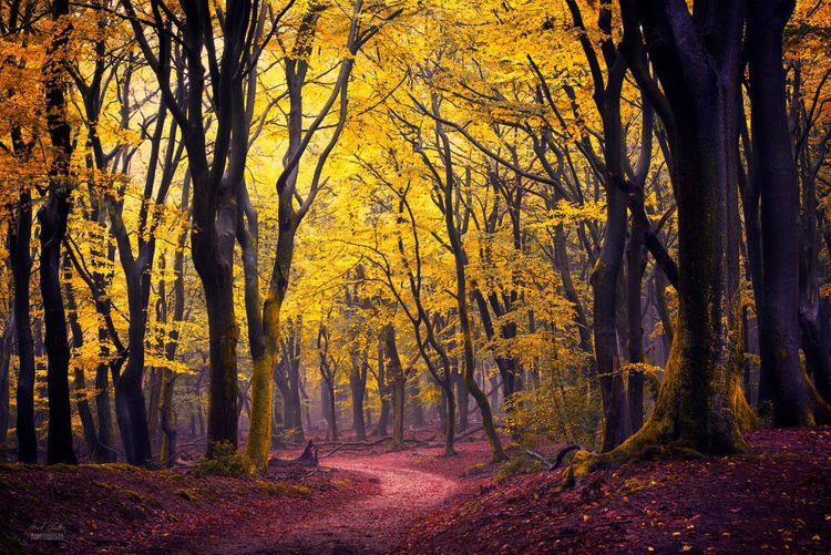 In the light of the leaves - Image 0