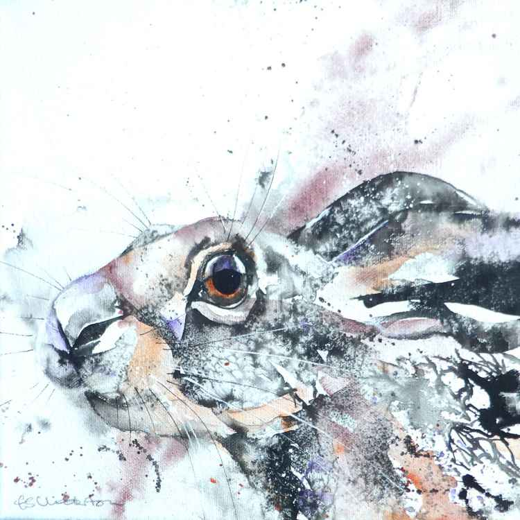 Hare encounter