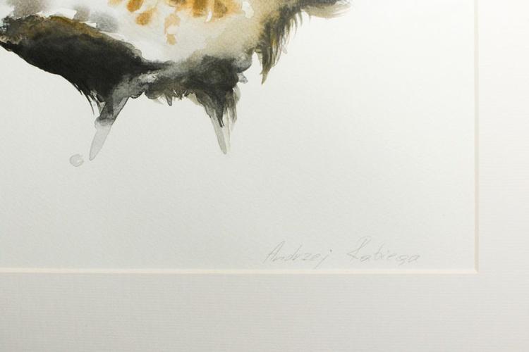 Grey Partridge (Perdix perdix) - Image 0
