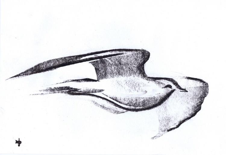Seagull in Flight - Image 0