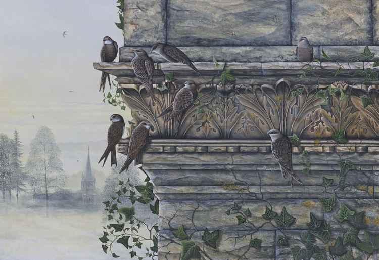 Swifts -