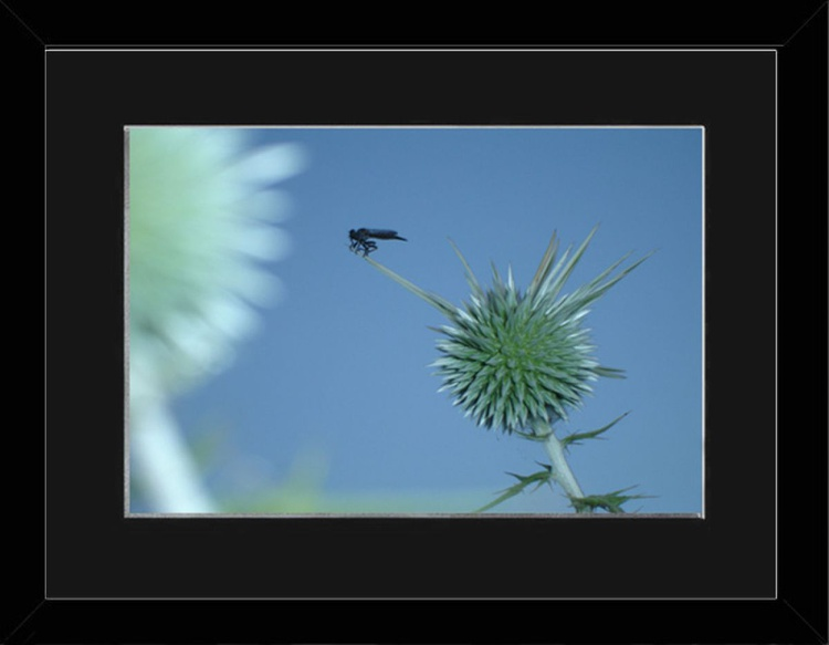 Balance On A Cyprus Thistle - Cyprus - Framed - Image 0
