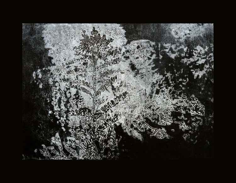 Inverted Nature