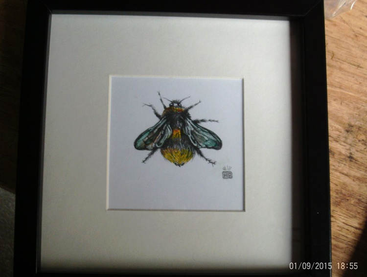 Bumble Bee Study 1. - Image 0