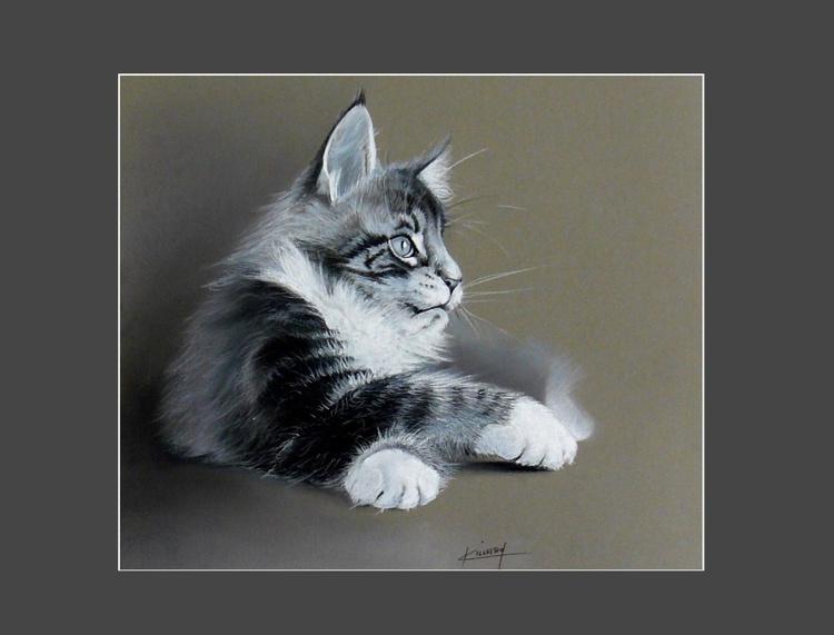 Gray kitten angora - Image 0