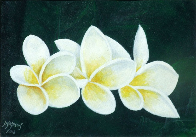 White Frangipani - Image 0