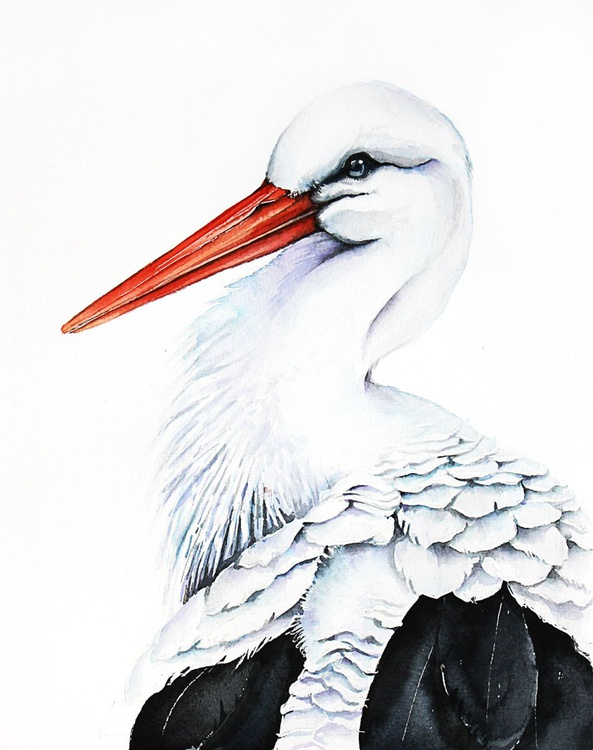 WHITE STORK, bird, birds, animals, wildlife watercolour painting - Image 0