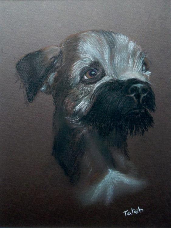 [179] Border Terrier - Image 0