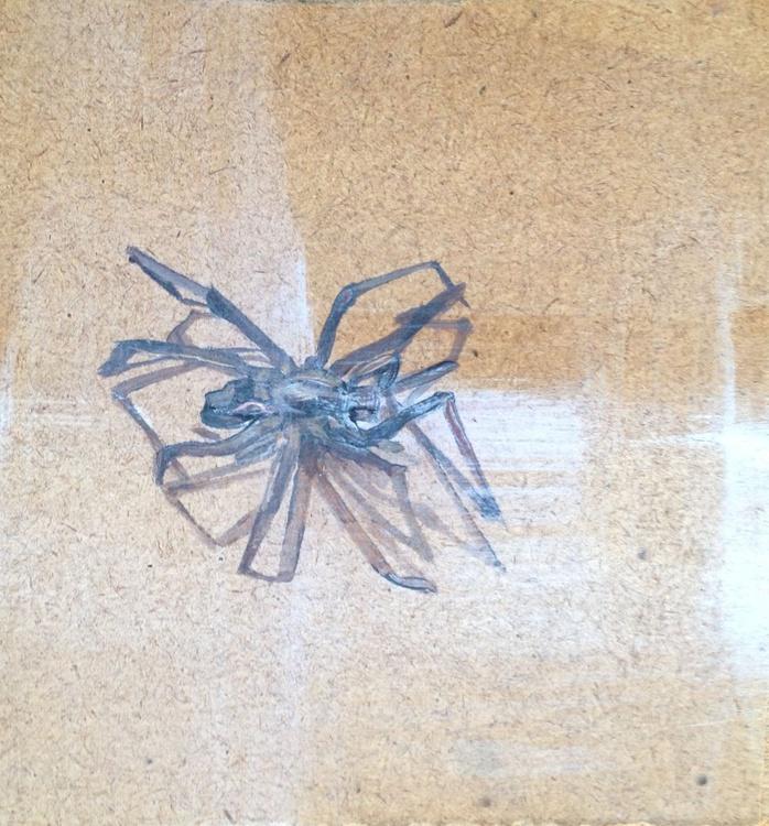 Dead Spider 4 - Image 0
