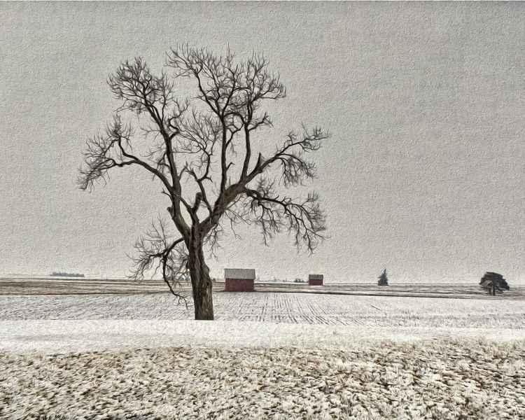 Forlorn Winterscape -