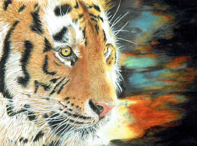 'Entranced' - Amur Tiger -
