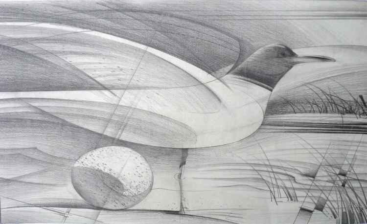 Seagull -