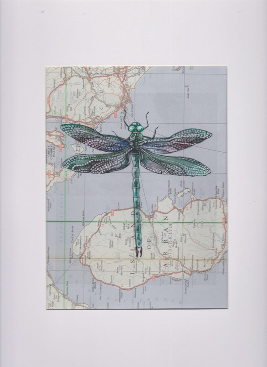 Dragonfly Migration 6 (Size 2) - Image 0