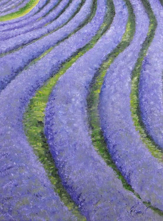 Lavender Field 3 - Image 0