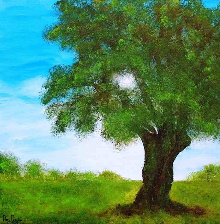 Old tree -