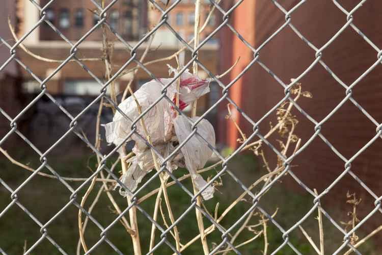 Urban flower behind wire fence -