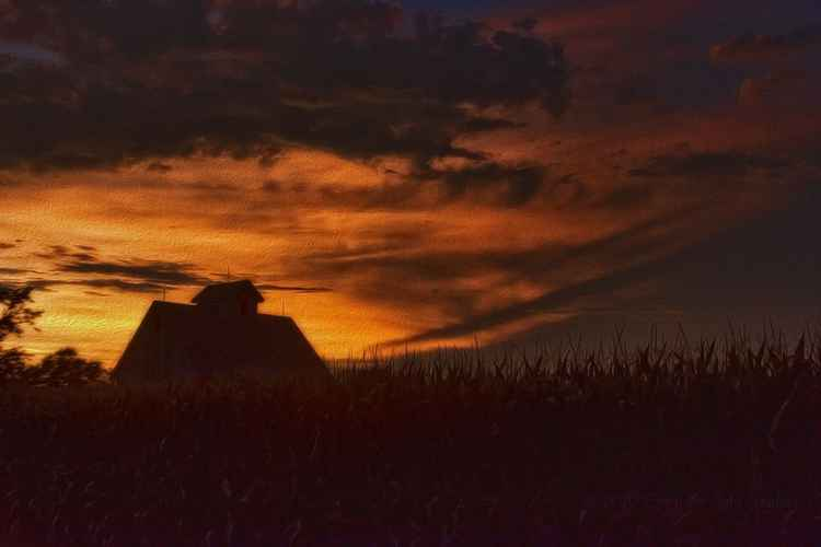 Corn Field at Twilight -