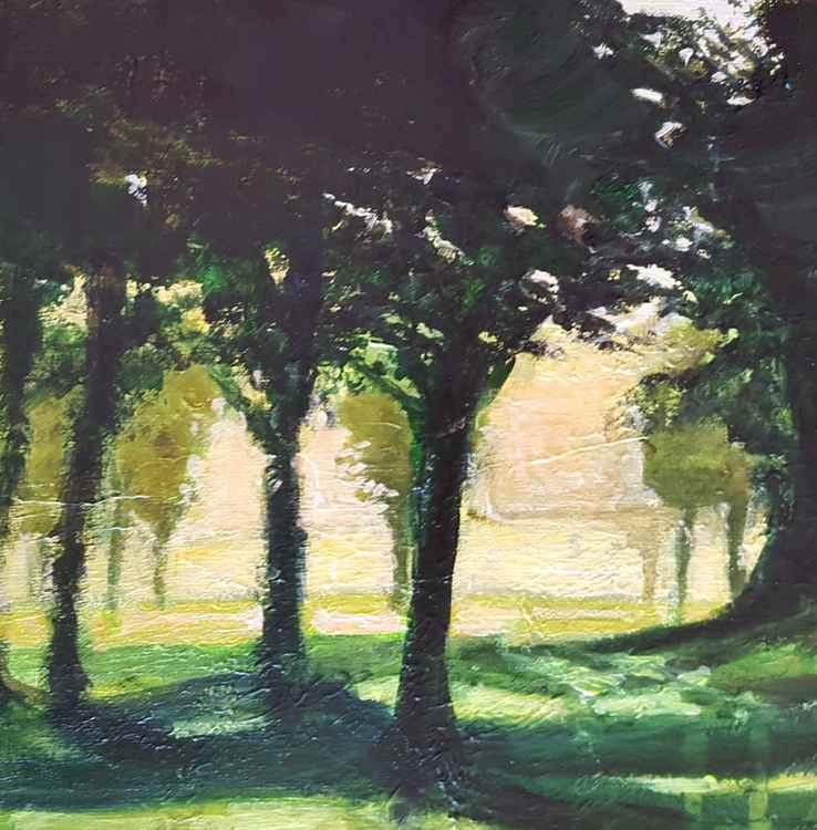 Hyde Park Trees -