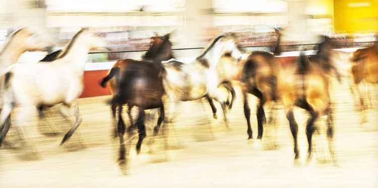 HORSE BALLET -