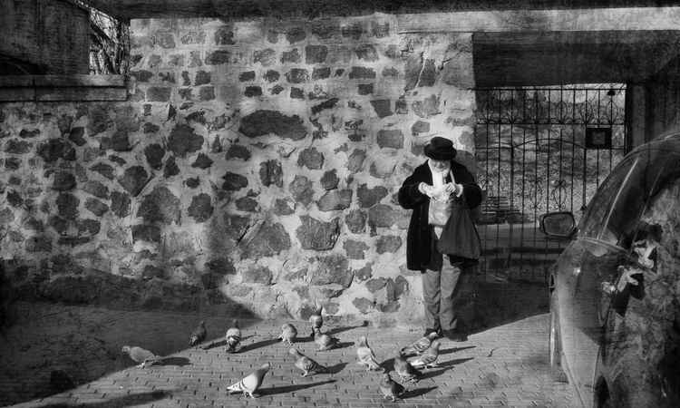 Granny and pigeons -