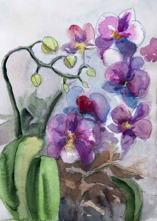 orchids -