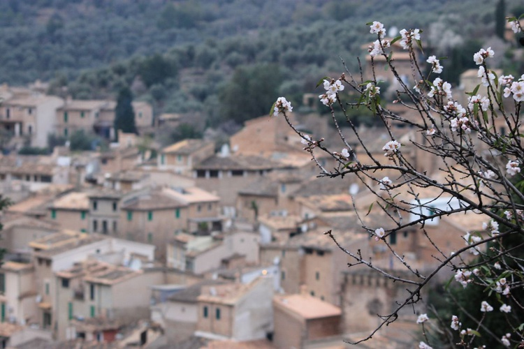 In bloom above the Mediterranean rooftops - Image 0