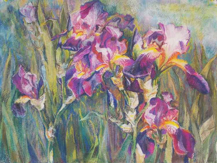 Irises in the garden -