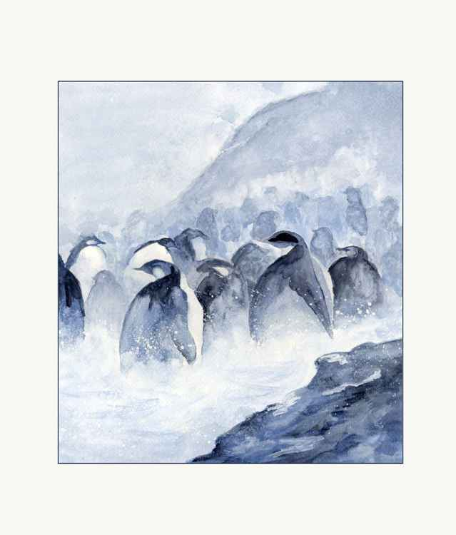 Penguins in the mist