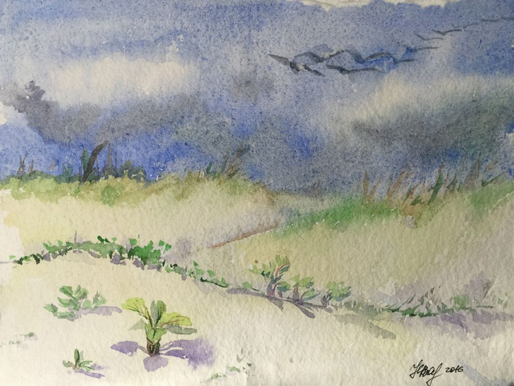 Sand dunes and grass - Image 0