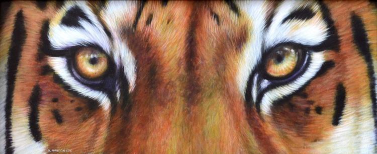Tigers Eyes - Image 0