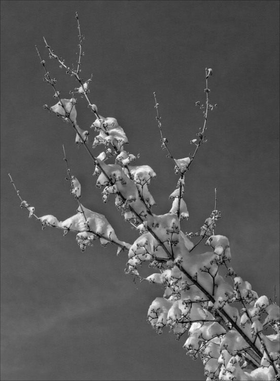 Branches Snow and Sky - Image 0