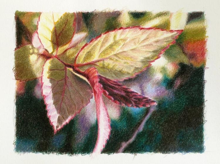 Foliage - coloured pencils - Image 0