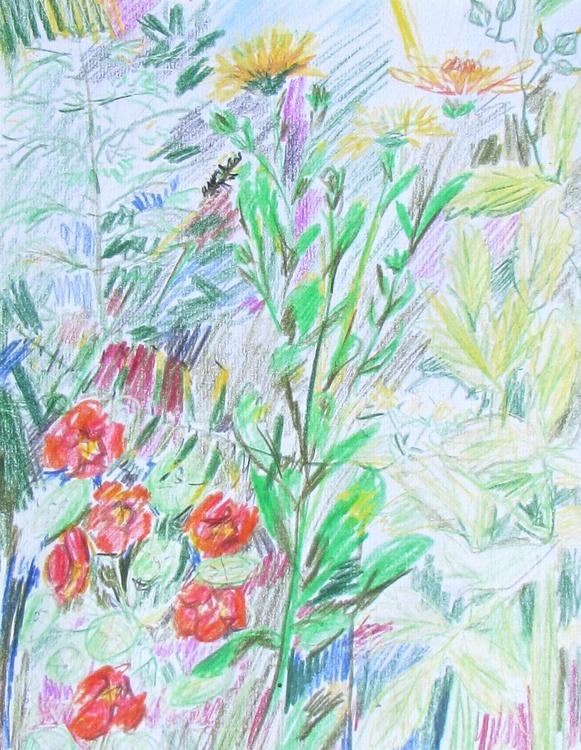 Nasturtiums Flowers and Herbs - Image 0