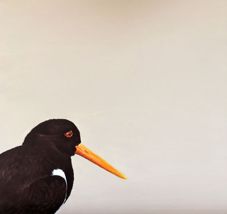 Oyster Catcher - Image 0