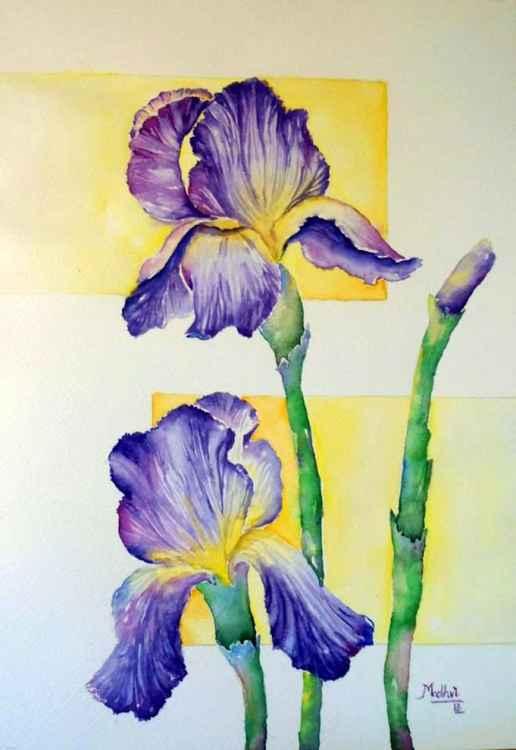Enchanting Iris