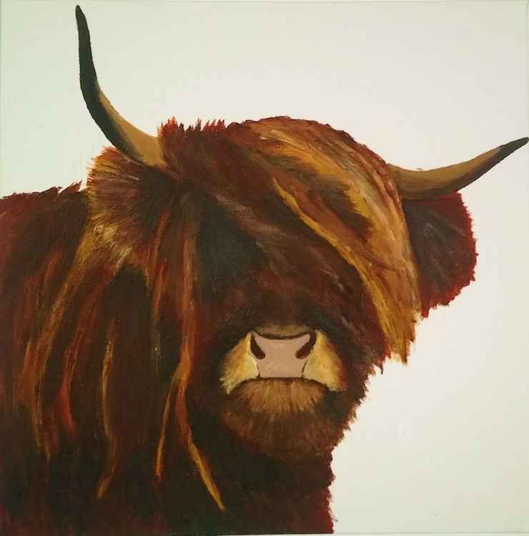 Bull-licious  Highland Cow -
