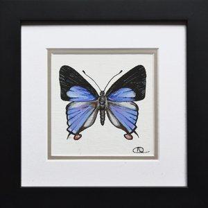 Specimen 005 - Blue Cornelian (Deudorix epirus) by Alexa Aulds