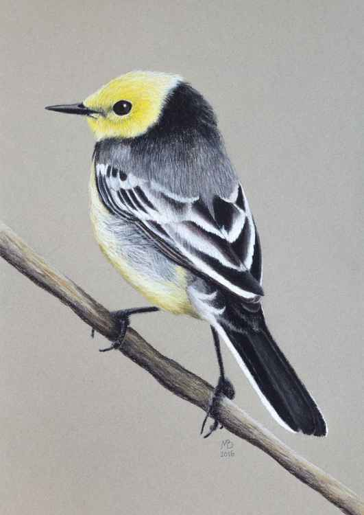"Original pastel drawing ""Citrine wagtail"" -"